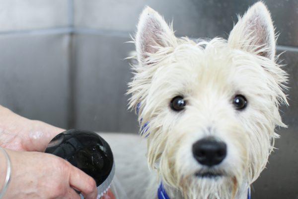 Dog Kennels Sherborne Dorset