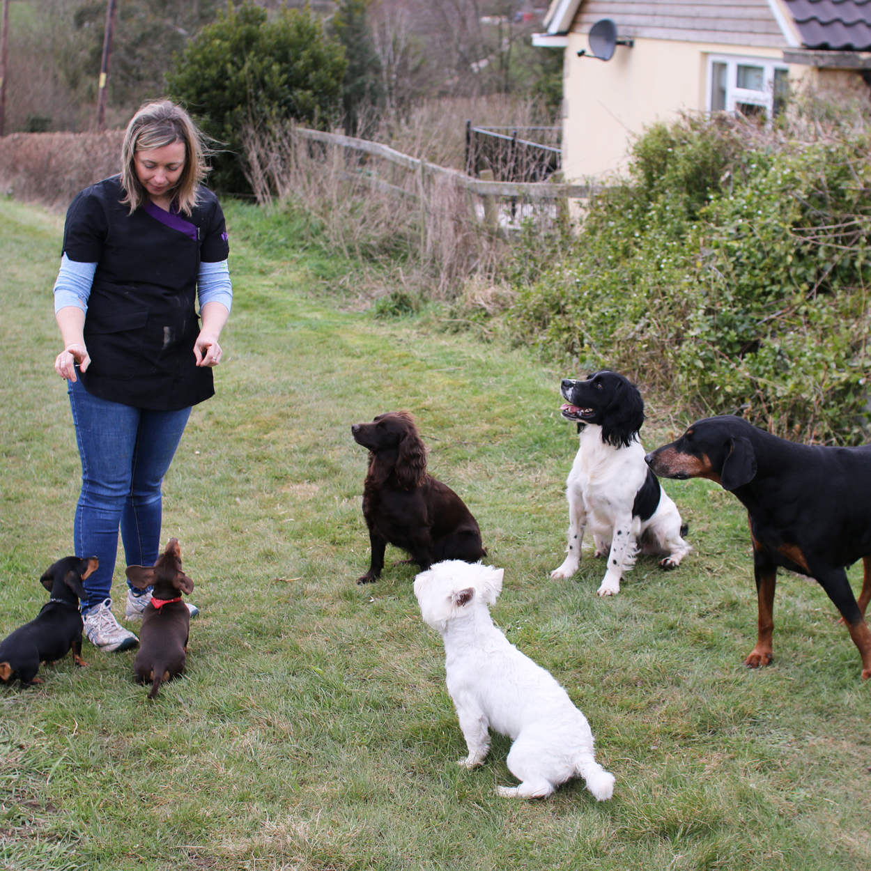 Doggy Day Care Sherborne Dorset